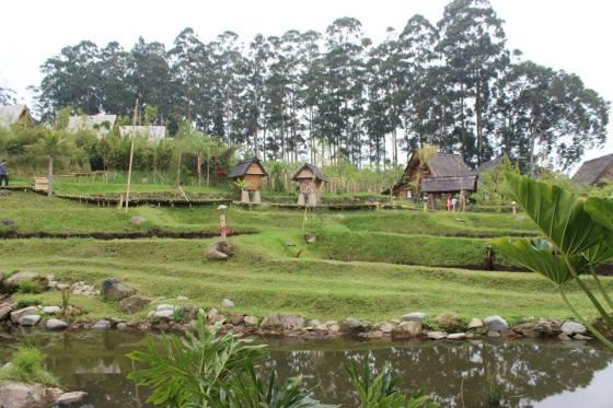 Hamparan sawah di Dusun Bambu