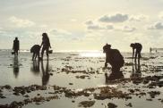 Mencari Bulu Babi di Pantai Pok Tunggal