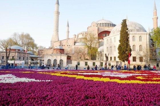 Tulip (Sultanahmet 4)