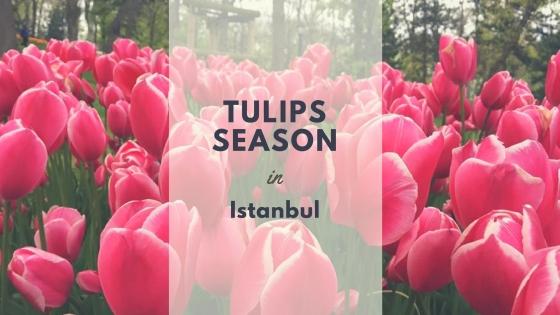 Tulips Season (1)